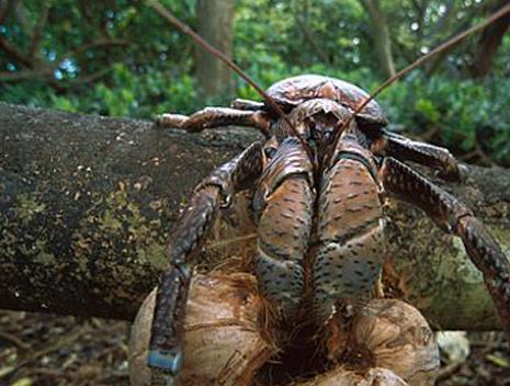 属于节肢动物门,甲壳纲