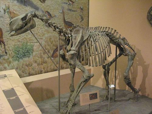 十三大怪异远古动物