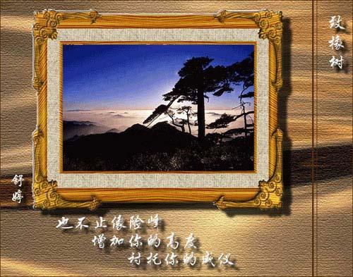 致橡树-舒婷-学科网资讯中心