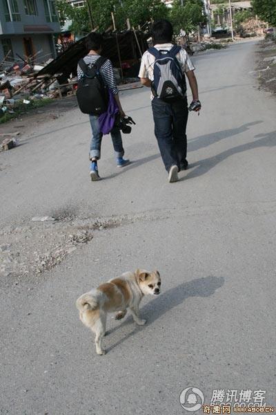 成都大熊猫繁育研究基地,陕西省珍稀野生动物抢救饲养研究中心等中国