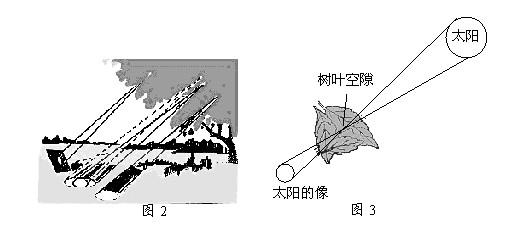浓密的树叶斜射在地面上的时候(图2),你会在地面上看到许多摇曳的光斑