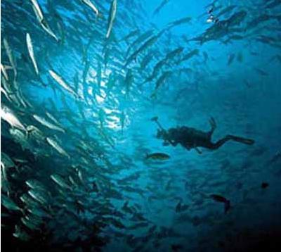 壁纸 海底 海底世界 海洋馆 水族馆 桌面 400_358