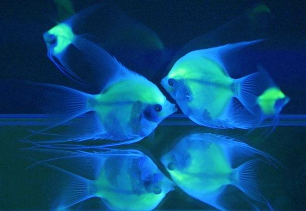 通过对湖水进行采样调查,专家终于发现,原来湖水中生活着一种发光生物