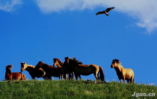 花纹          鞍马艺术是蒙古族马文化不可或缺的