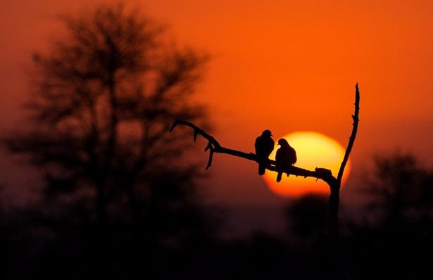 非洲野生动物壮丽剪影