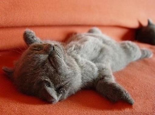 猫猫身体上的各个部分也能表达有趣的含义