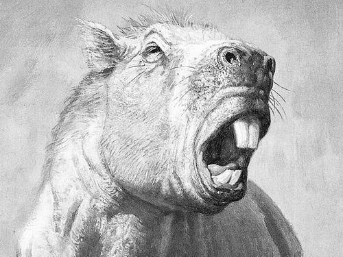 未来对该动物牙齿微磨损情况进行的分析,可能会对这只巨型老鼠的饮食