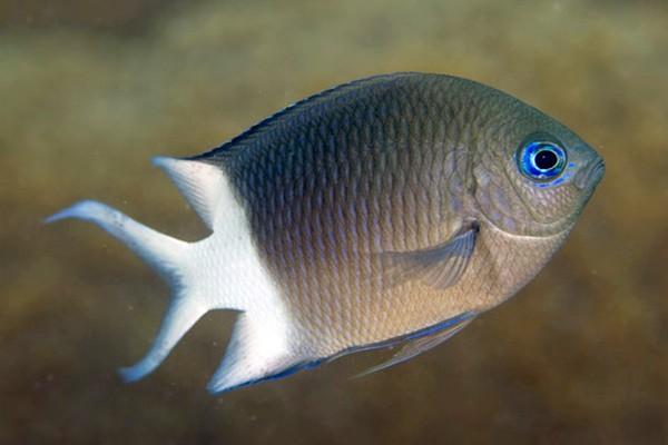纸盘手工制作海洋动物