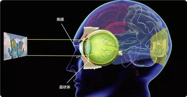 眼球的基本结构