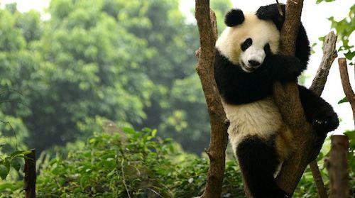 是世界上最可爱的动物之一