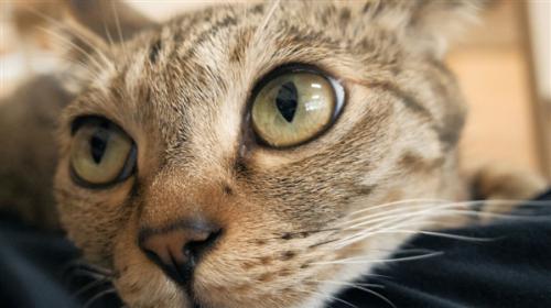 研究人员发现,无论是眼神迷离的举止还是脾气暴躁的鬼脸,一只猫的面部