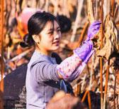 重庆邮电大学举办挖藕比赛 上演淤泥大作